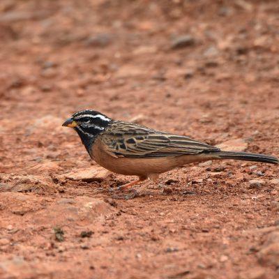 Rietvlei nature reserve - Gauteng South Africa, 8 January 2020